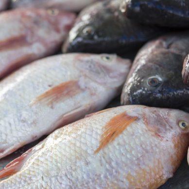 Comment bien choisir votre poisson au marché